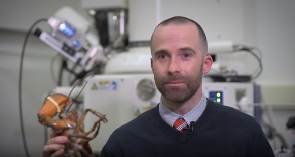 Dr. Anthony Dellinger explains his work in the lobster industry