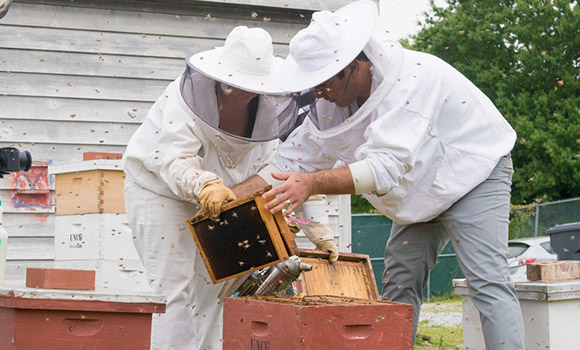 Postdoctoral researchers Kaira Wagoner and Esmaeil Amir insert new frames into an experimental hive at UNCG's beeyard.